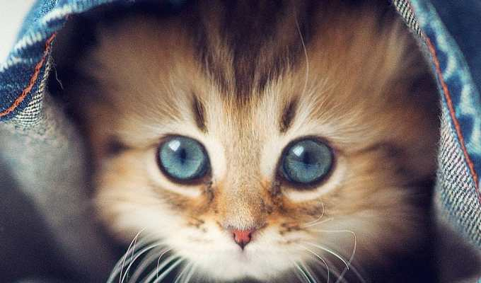 If you own a cat then you'll probably be able to relate to this list of GIFs. Here are some of the top moments anyone who owns a cat will get.