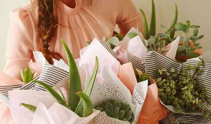 These plant gift ideas are going to be perfect for anyone in your life who has a green thumb! Here is our list of the top plant gifts!