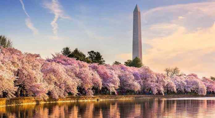 Washington DC: A Tourists Guide