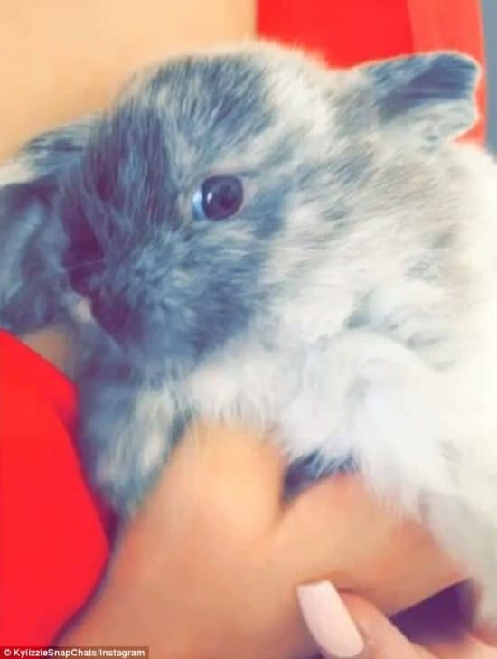Our Favorite Kardashian And Jenner Pets – Ranked!