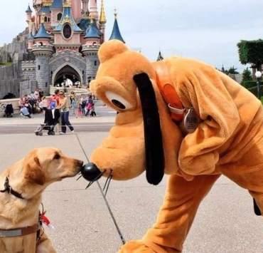 10 Must Watch Disney Movies