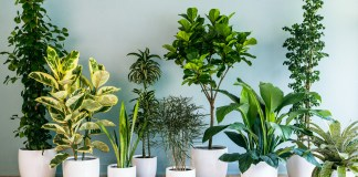 Best Houseplants To Remove The Negative Vibe
