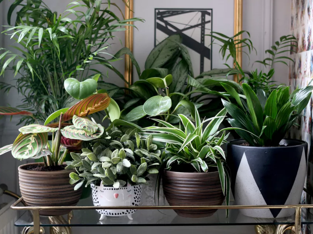 How To Incorporate Foliage Into Your Room Decor