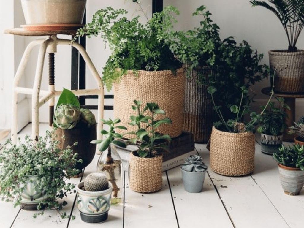 Top 8 Plants to Grow This Summer - With No Risk Of Them