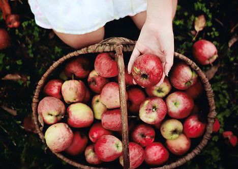 fall apple recipes, Get The Most From Your Apple Picking With These Fall Apple Recipes
