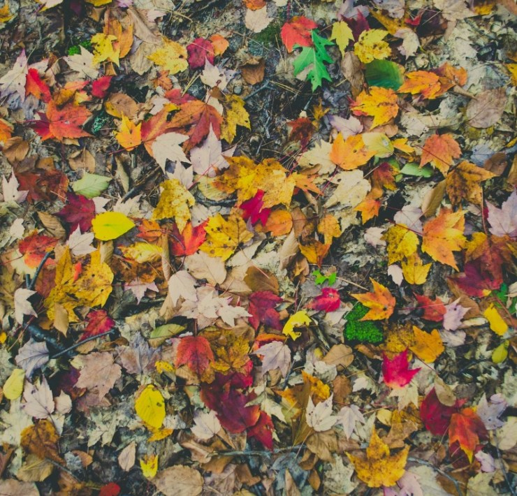 10 DIY Projects Using Fall Foliage