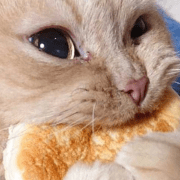 cat food recipes, 8 Homemade Cat Food Recipes That Your Furball Will Love