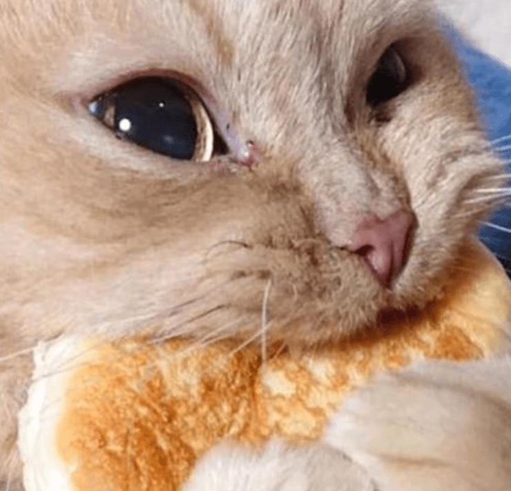 8 Homemade Cat Food Recipes That Your Furball Will Love