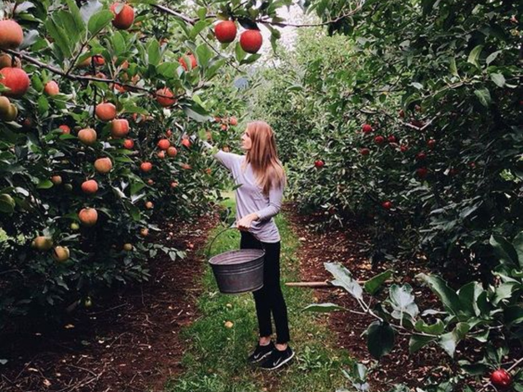 Apple Picking, The Best Apple Picking Spots You Can Visit This Fall