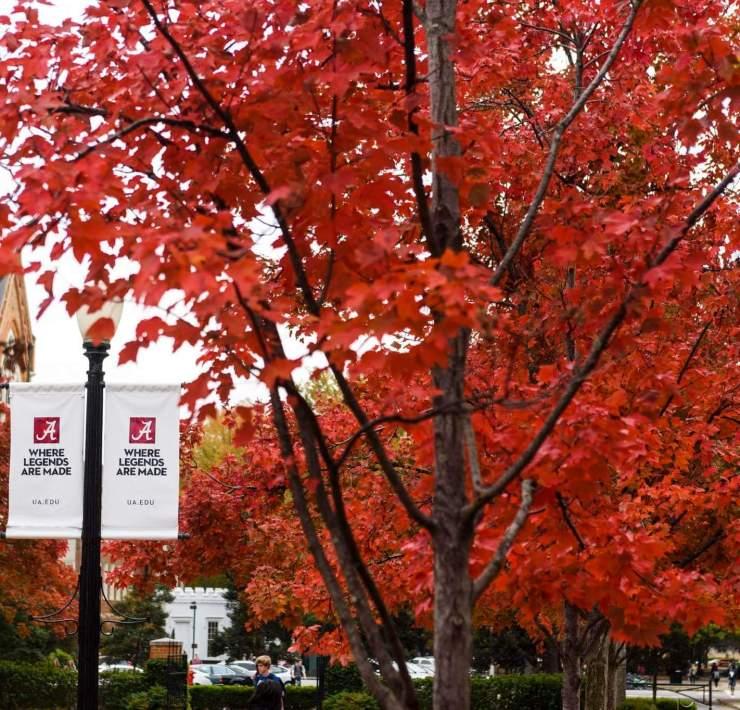 The Ultimate Tuscaloosa/University of Alabama Seasonal Bucket List for Fall and Winter