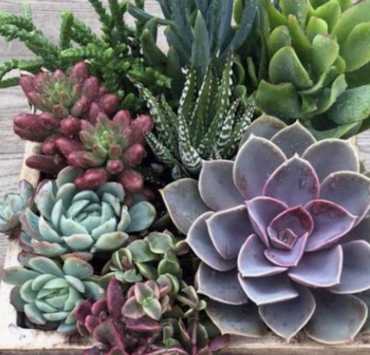 10 Benefits Of Having Succulents In Your Dorm