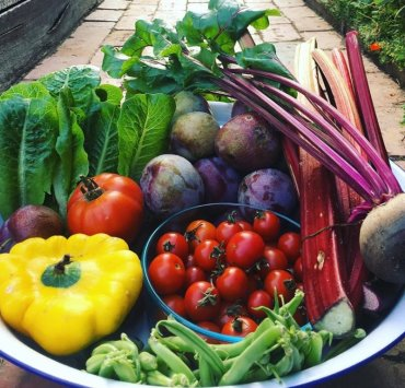 10 Hardy Garden Plants That Will Give You Lots Of Produce