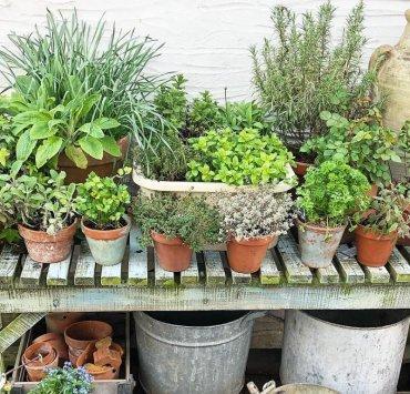 10 Garden Herbs Every Cook Needs To Grow