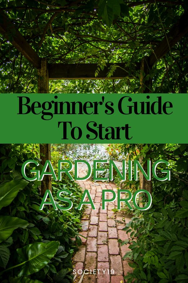 Beginner's Guide To Start Gardening As A Pro