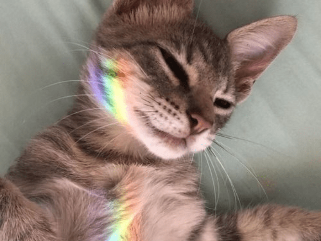 14 Wholesome Cat Posts That We All Just Need Right Now