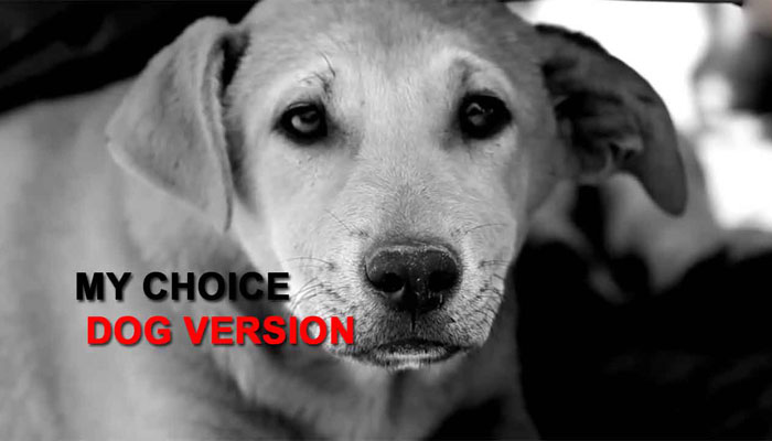 After women and men, it's time for a hilarious Deepika Padukone #Mychoice dog version