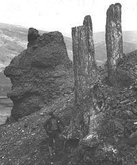 Lester Frank Ward in Yellowstone National Park with Fossil Tree Trunks, 1887