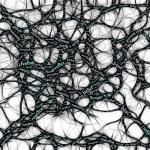 imagen neurociencia