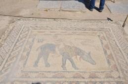 Nur ein Mosaik von mehreren in Volubilis - unglaublich, dass es nach so vielen Jahrhunderten noch erhalten ist!