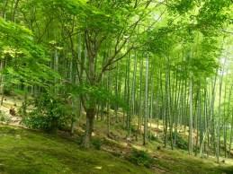 Im Arashijama Bambuswald herrscht eine unglaublich ruhige Atmosphäre - wenn da nur nicht die vielen Touristen wären.