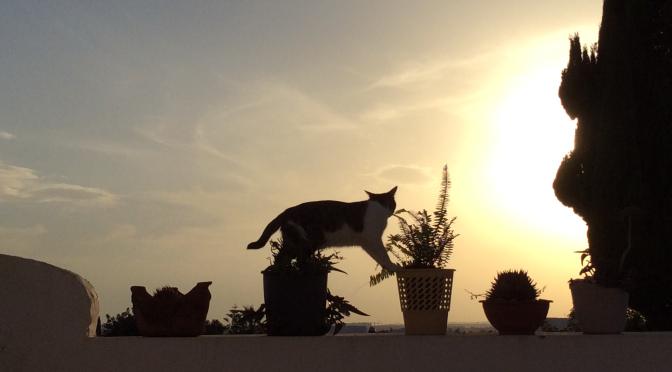 """Meine Katze heißt """"What's up"""" auf Tunesisch."""
