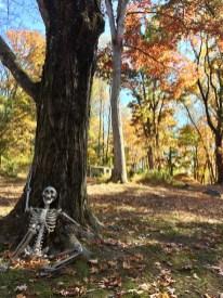 ...Halloween Vorbote...?!