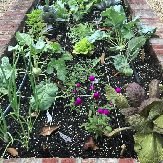 Vegetable plantings in a square foot style garden bed