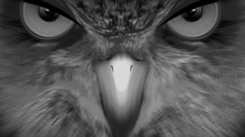 EagleEyes for PC, Windows And Mac – Free Download