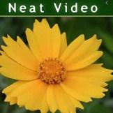 Neat Video Pro