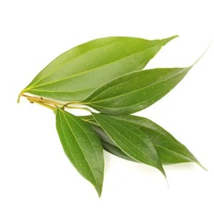 cinamon leaf