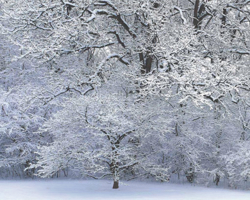 The Winter Scenes Screensaver screenshot 1