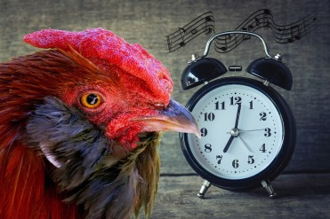Time management e cronobiologia