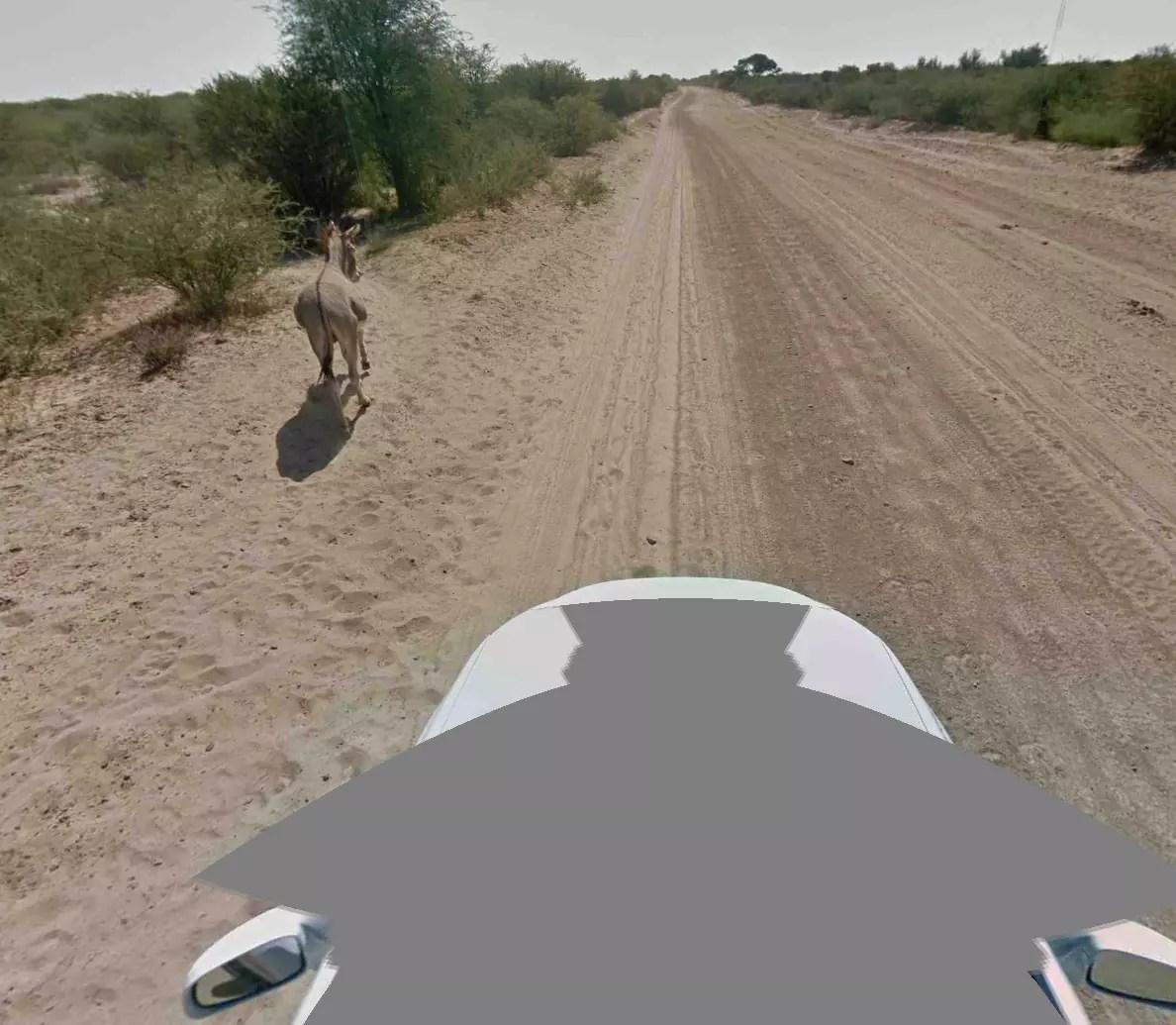burro atropellado google street view 3