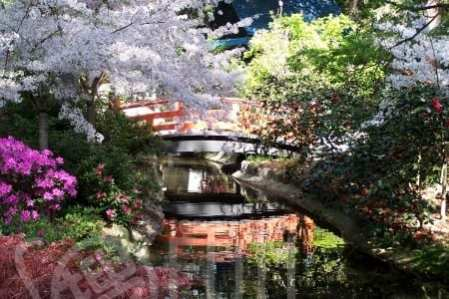 Japanese-Garden-in-Spring-by-John-Stanley-450x300