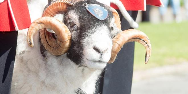 A Sheep in British Army Got Promoted to Lance Corporal