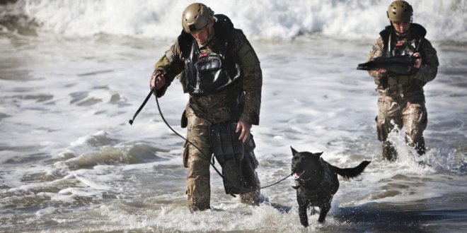 The dogs of the US Marine Corps Special Operations Command |  Business Insider