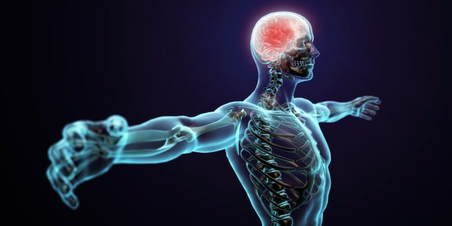New insights into how the mind influences the body | ScienceDaily
