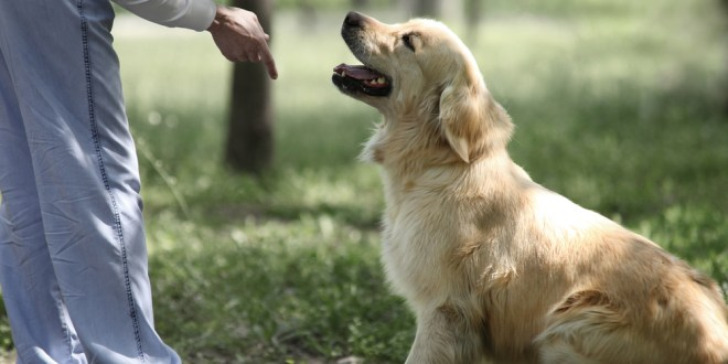 Your dog remembers what you did | ScienceDaily