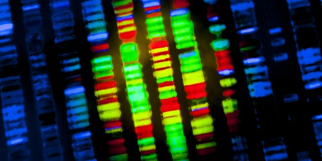 Scientists discover precise DNA sequence code critical for turning genes on | KurzweilAI