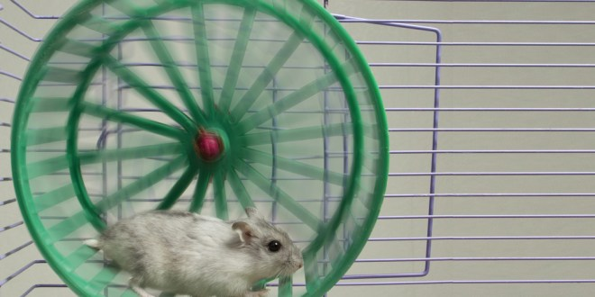 'Exercise pill' turns couch potato mice into marathoners | Science News