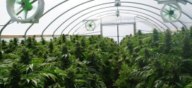 Former special forces infantryman sues for raid on legal marijuana greenhouse | Denver Post