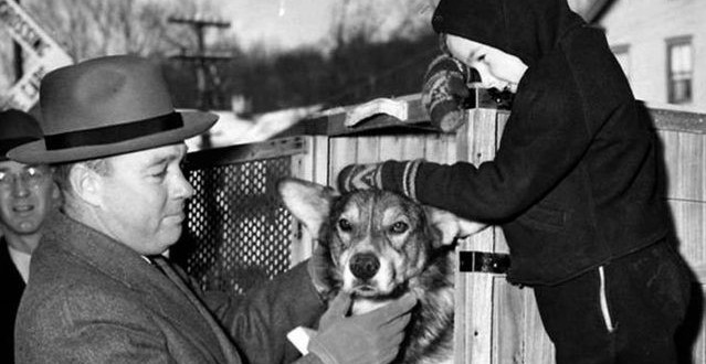 Heroic Army working dog awarded posthumous medal   Army Times