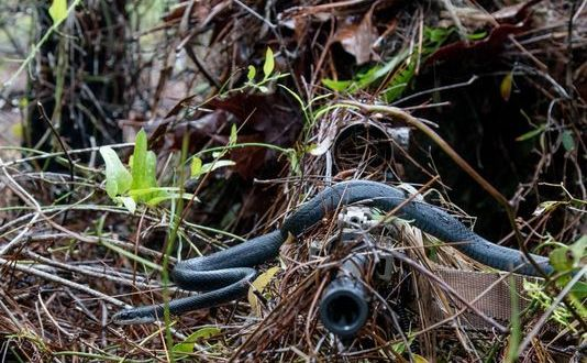 Snake slithers across U.S. Army National Guard sniper's rifle in hair-raising photo | USA Today