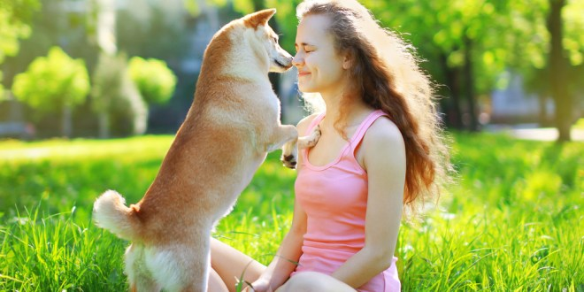 Dogs understand what's written all over your face | Science Daily