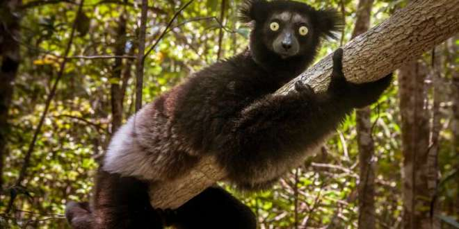 Mammals cannot evolve fast enough to escape current extinction crisis | Science Daily