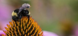 First sensor package that can ride aboard bees | Science Daily
