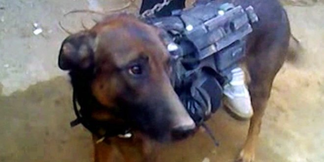 This canine prisoner of war is still held by Taliban captors | We Are The Mighty