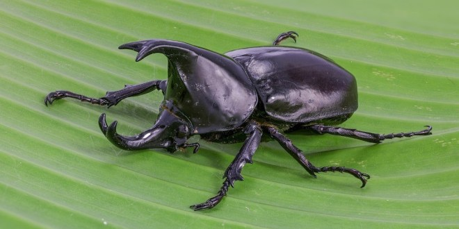 Scientists successfully put tiny GoPro-style wireless cameras on beetles, and it's paving the way for miniature robots | Business Insider