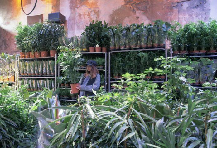 vente de plantes marseille
