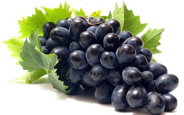 Risultati immagini per uva nera